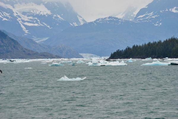 kalbende Gletscher am Pazifik