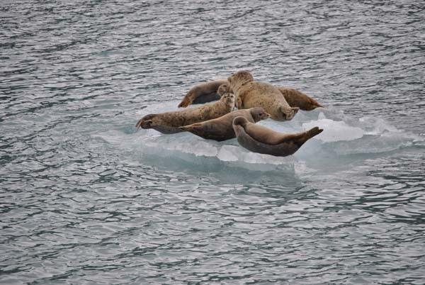 die Tierwelt des Meeres