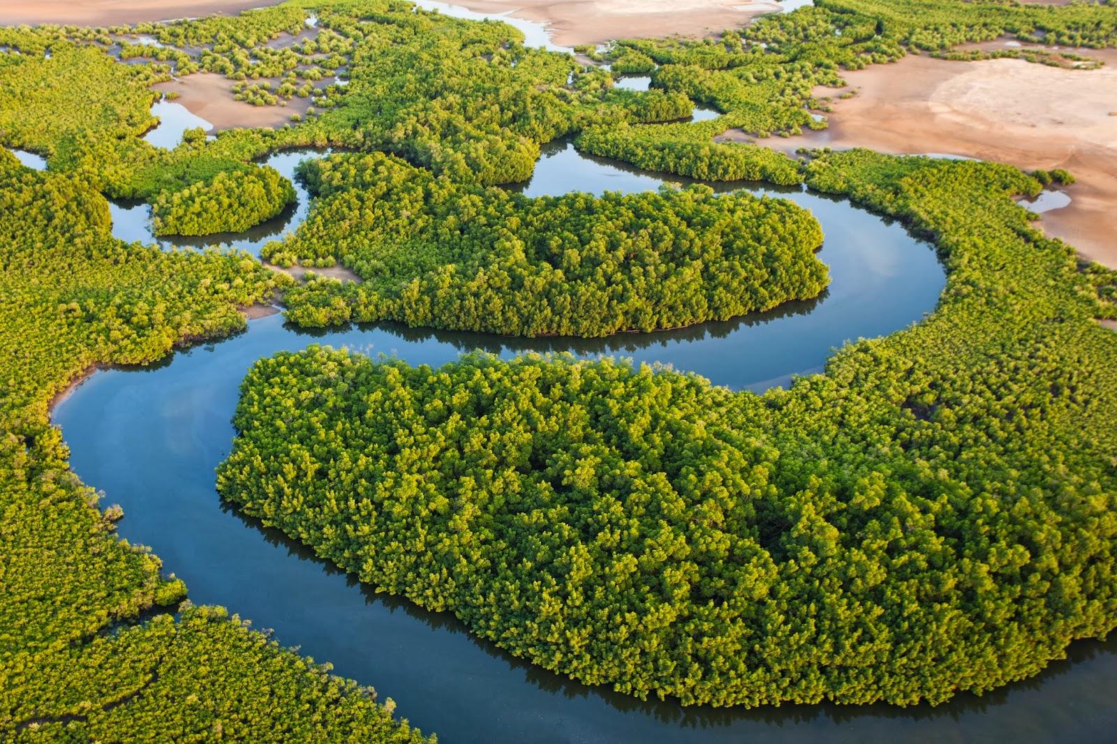 Une mangrove intacte