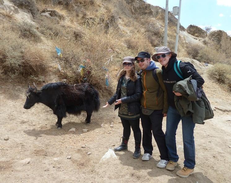 Ein Yak, ein Yak, ob es uns wohl über den Haufen rennen wird?!