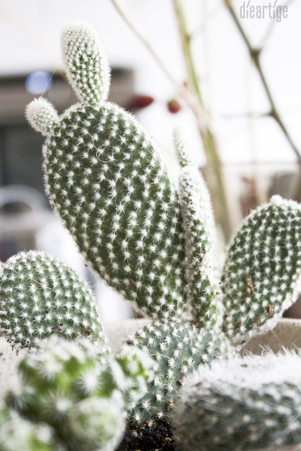 dieartigeBLOG - Ohren-Kaktus