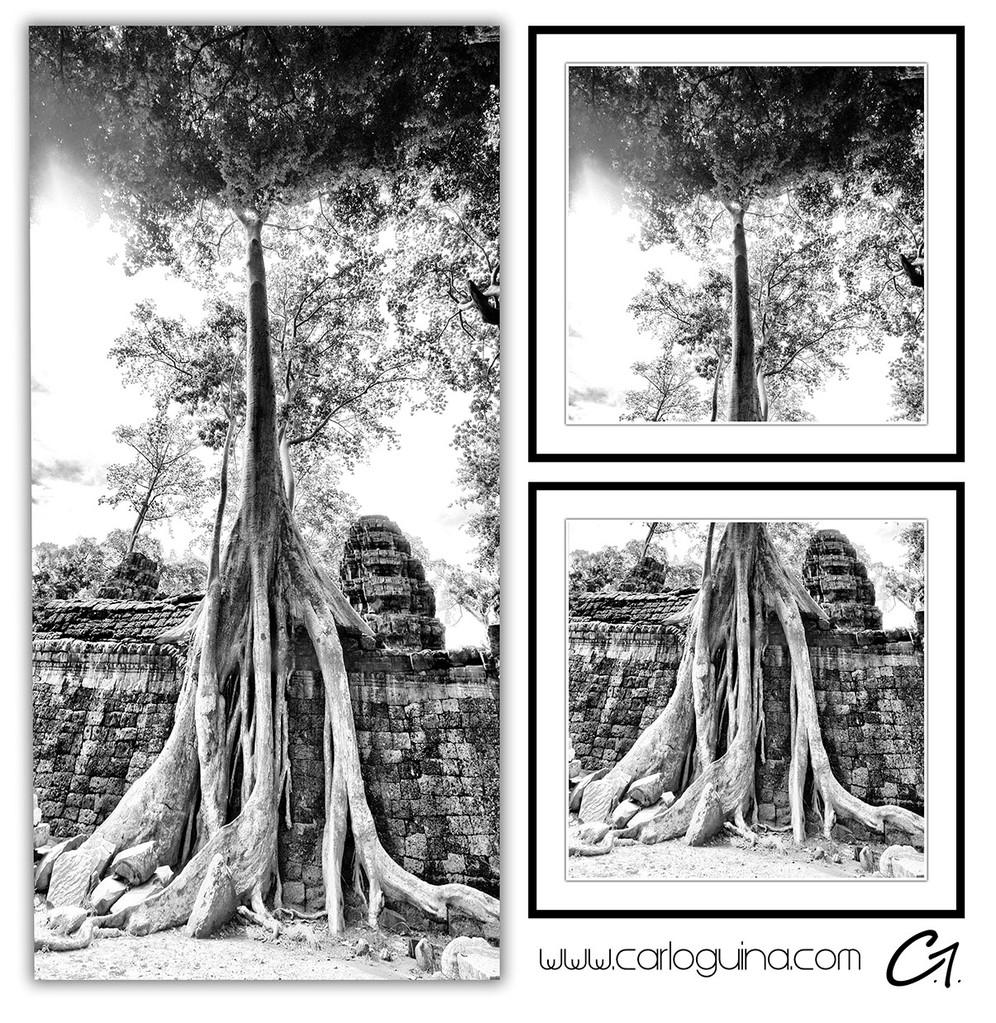 Strangling Trees, Cambodia