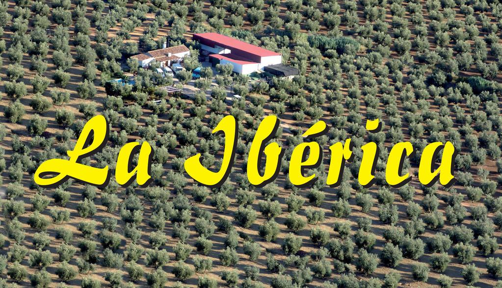 Vista aérea de Finca La Extremeña, de donde extraemos y fabricamos las Aceitunas La Ibérica.