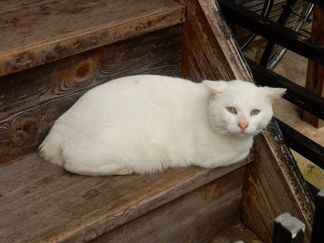階段の猫、再び