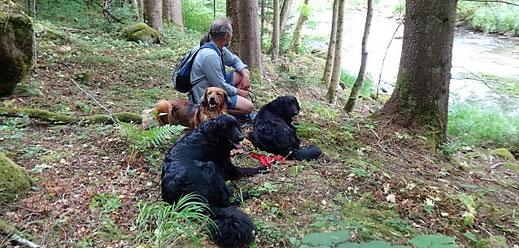 Hundetrainer mit Hovawart