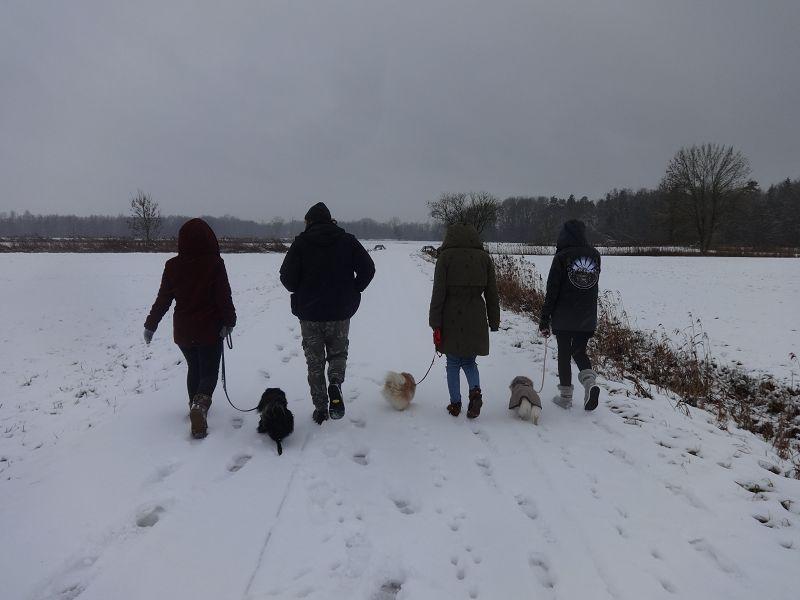Weihergebiet bei Straubing im Schnee