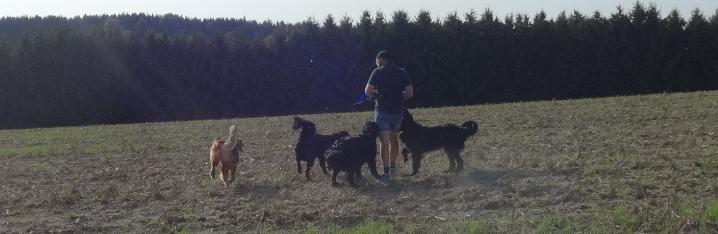 Rudelmensch mit vier Hunden
