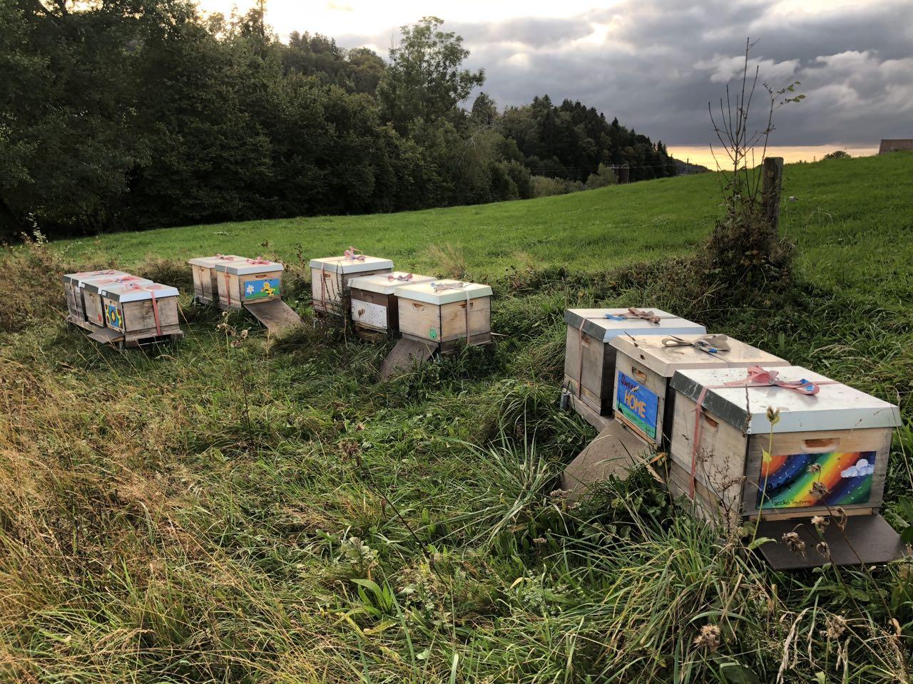 Der idyllische Schulungs-Bienenstand mit sanftmütigen Völkern.