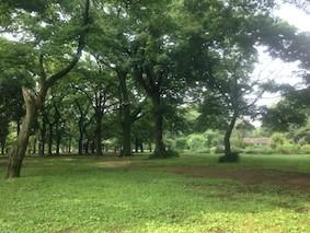 朝ヨガ @ 代々木公園の画像