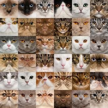 Bildquelle: 36 cat heads © Eric Isselée - Fotolia.com
