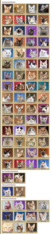 TICA Breeds, Quelle: www.tica.org