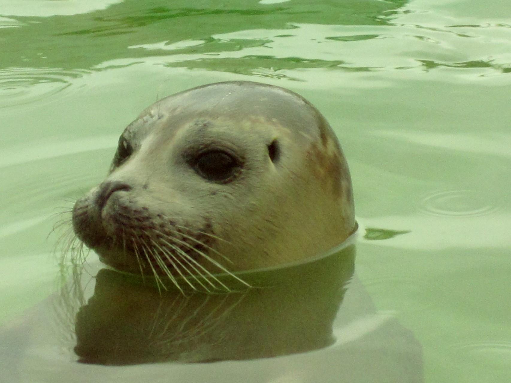 Seehundstation Norddeich, ca. 8 Gehminuten von der Ferienwohnung