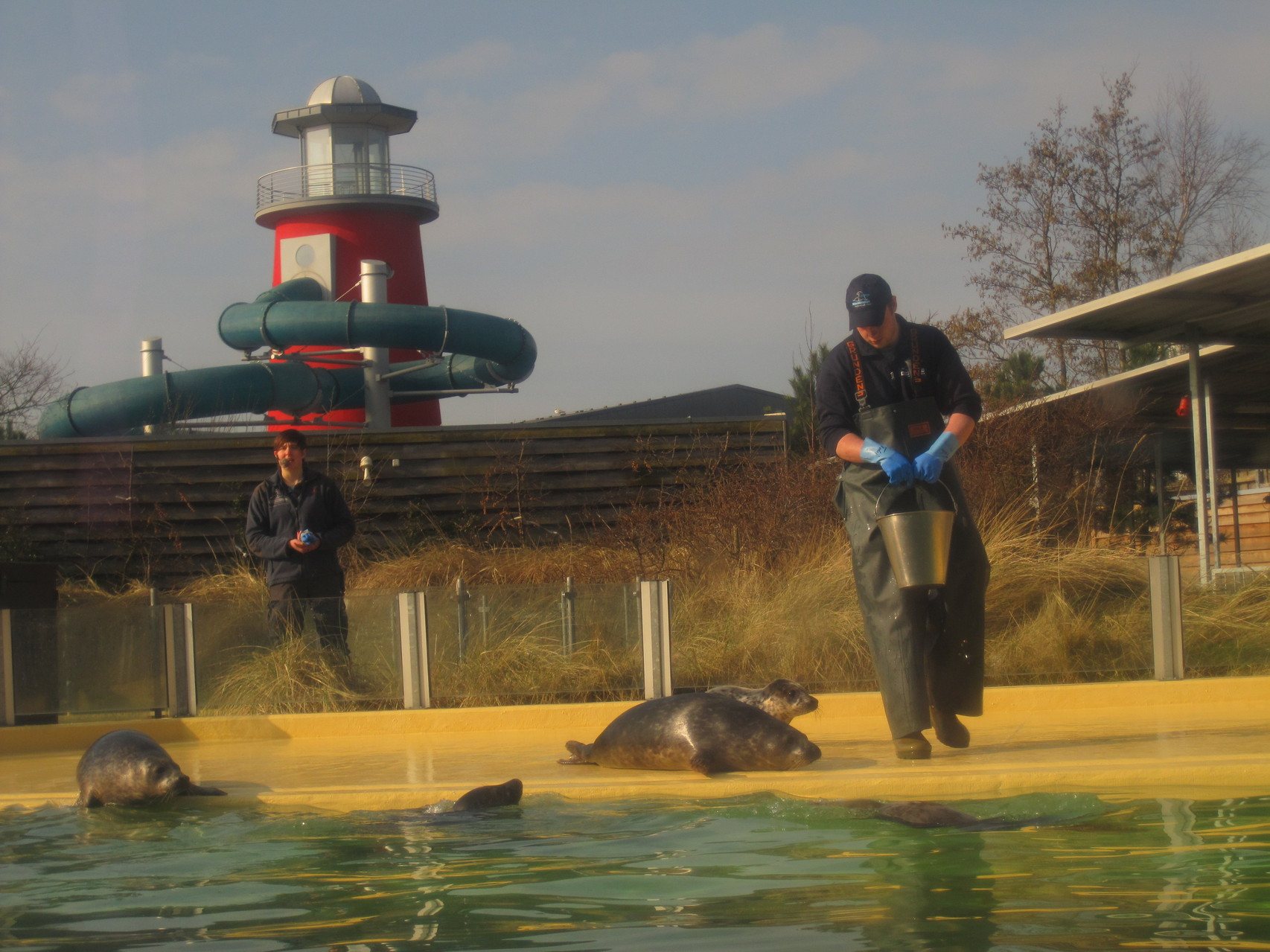 Fütterung in der Seehundstation Norddeich. Im Hintergrund: Wasserrutsche des Oceanwave-Hallenbads