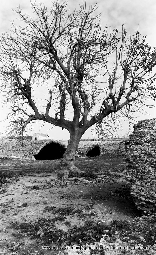 [NB016-1981-09] Carthage (Carthago) : Citernes de La Malga