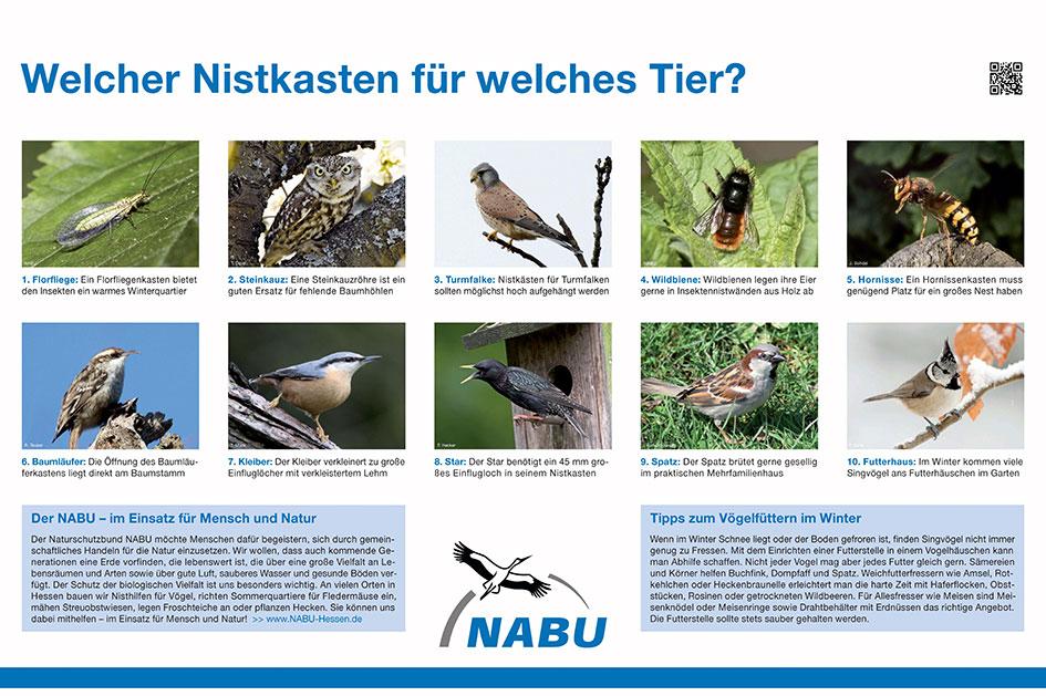 Nicht nur Vögel freuen sich über Nistkästen, auch Insekten nisten sich dort gerne ein.