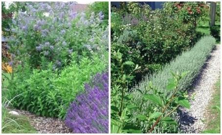 Säckelblumen & Lavendel kombiniert mit Kies.