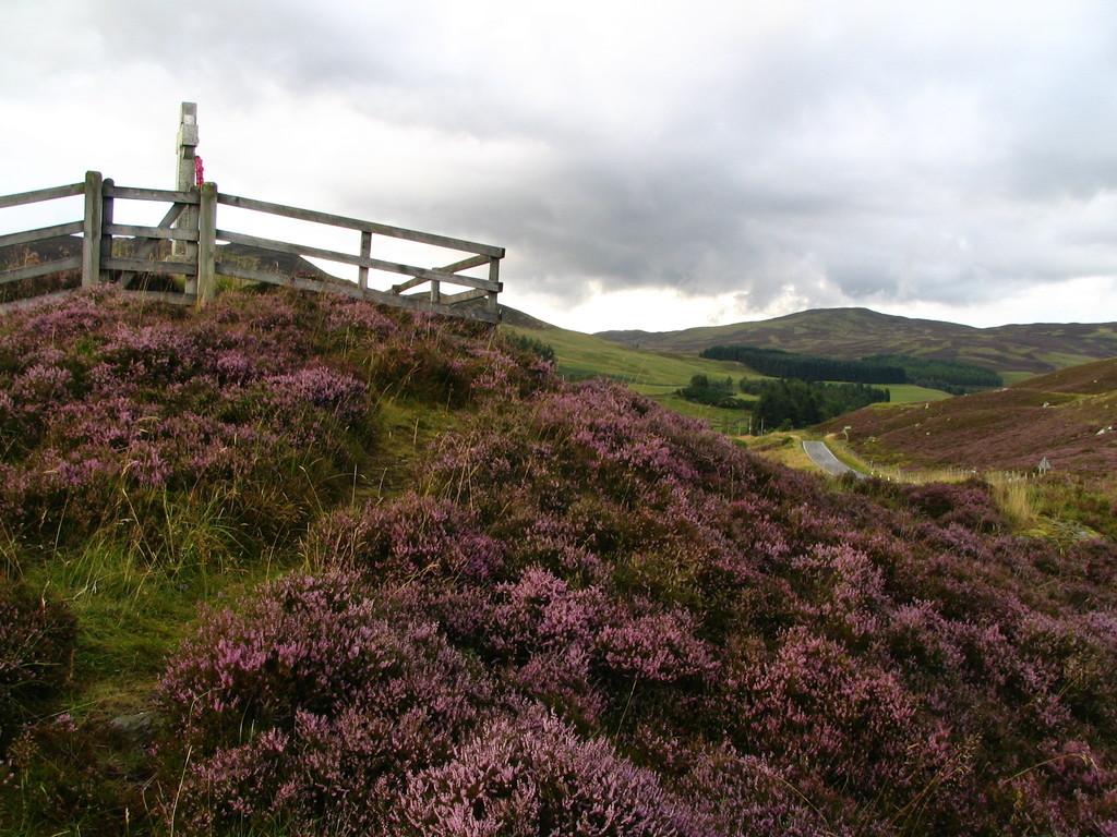 Heide bei Pitlochry