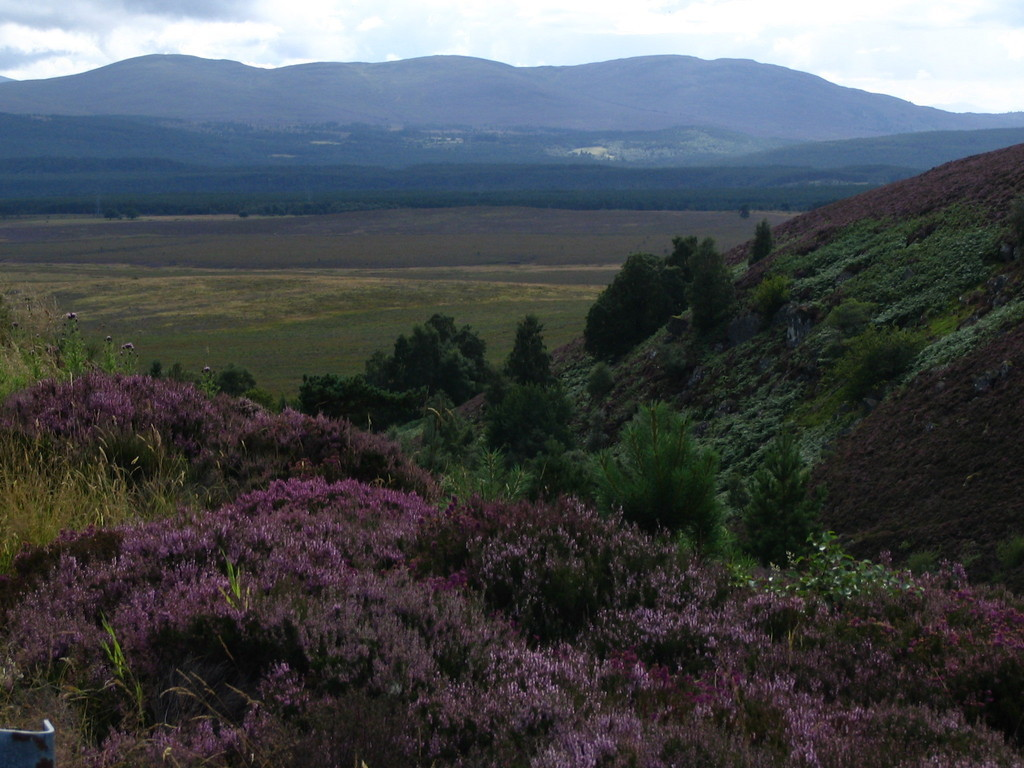 The colours of Scotland - Blick in die Blue Mountains (Cairngorms)