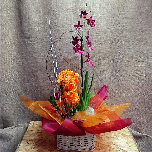 Cesta con orquidea miltonia y dendrobium