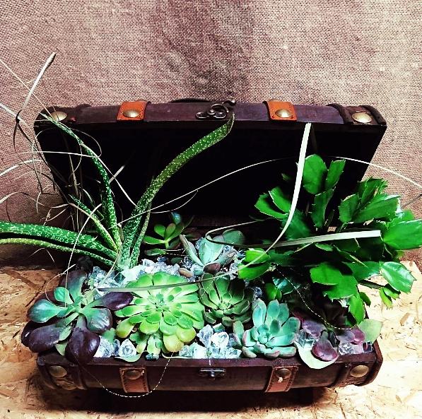 Cofre con plantas crasas