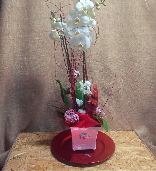 Orquideas en base decorativa