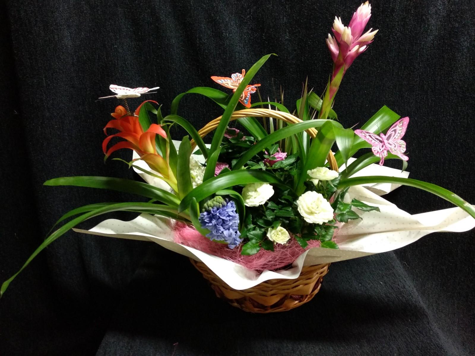 Cesta con bromelias, rosal mini y jacintos