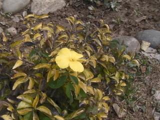 ウッタルカーシーで見つけた花