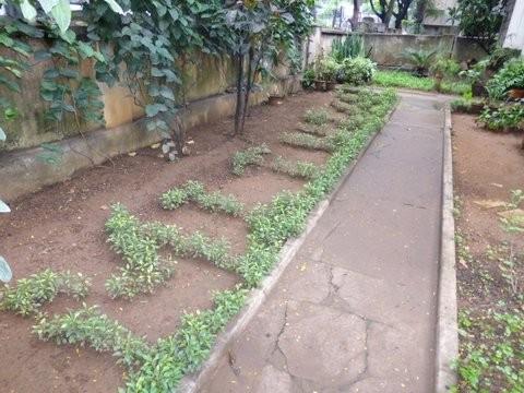 庭に植えられた草花はMITUのシェイプ
