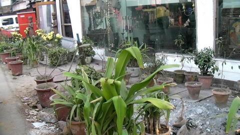 ホテル前に飾られた植木鉢。。