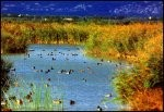 Parc naturel de l'Aiguamolls