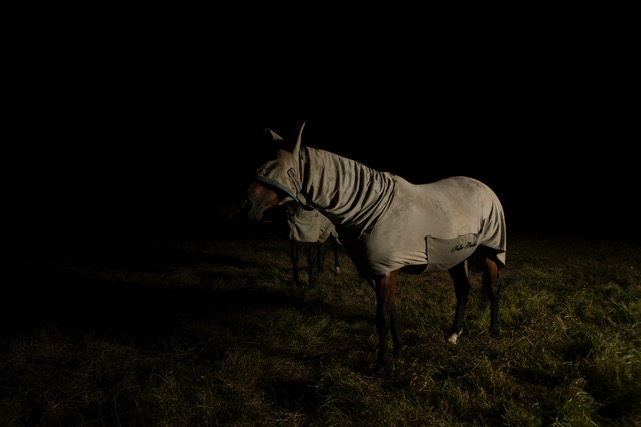 Warrior horse: Of course, it's a nice horse, wearing a blanket, but for me it looked so fierce.