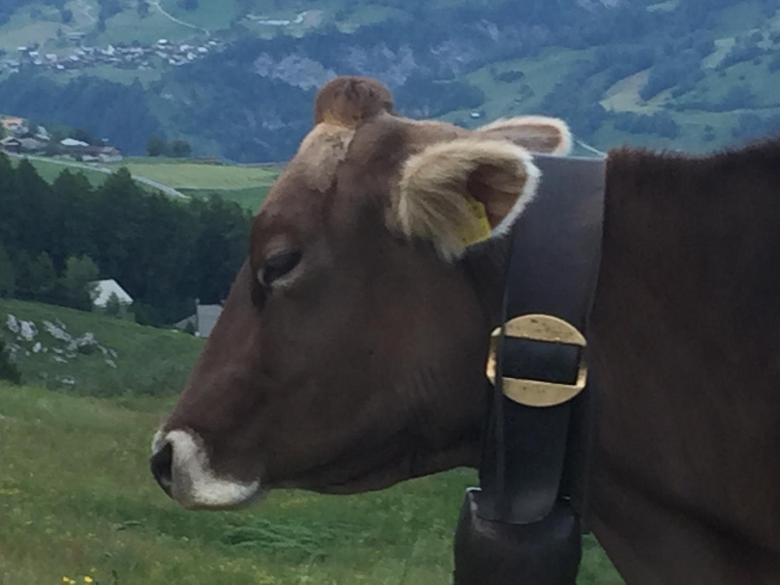 Demontage & Rückbau Laax Schweiz