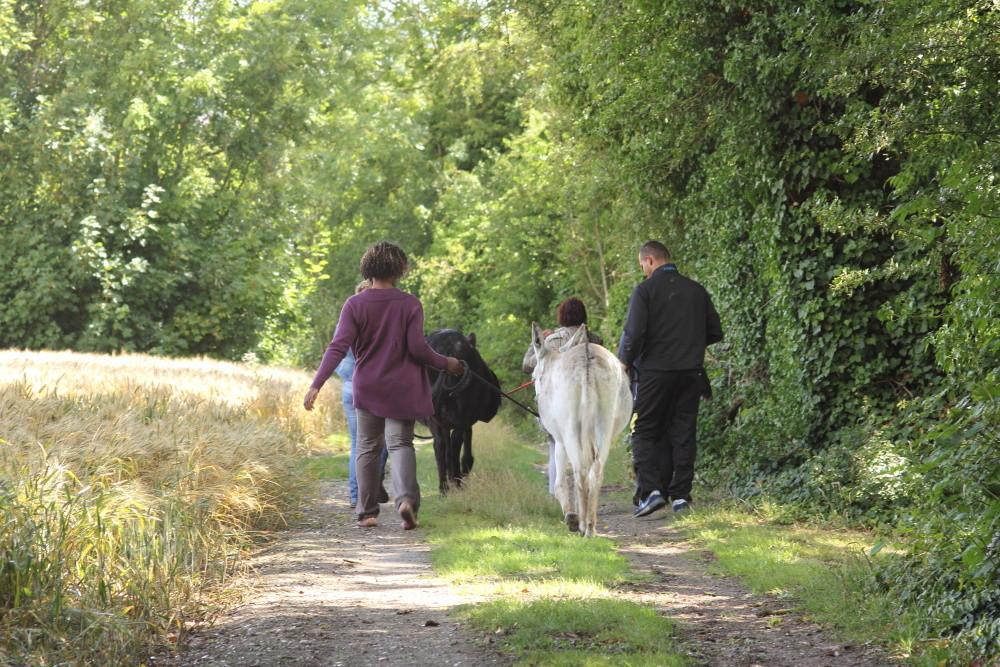 Balade accompagnée des ânes
