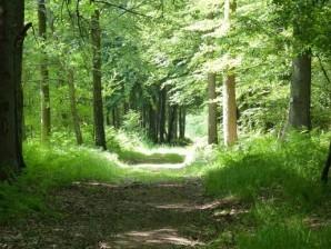 Balade sensorielle en forêt de Crécy