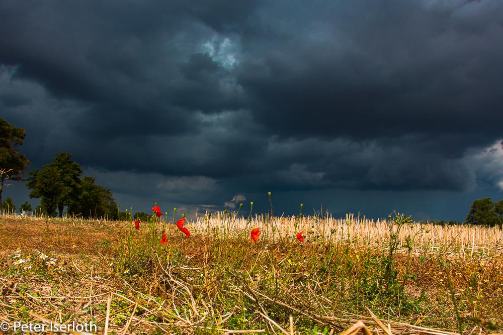kurz vor dem Gewitter, Schleswig-Holstein, Deutschland