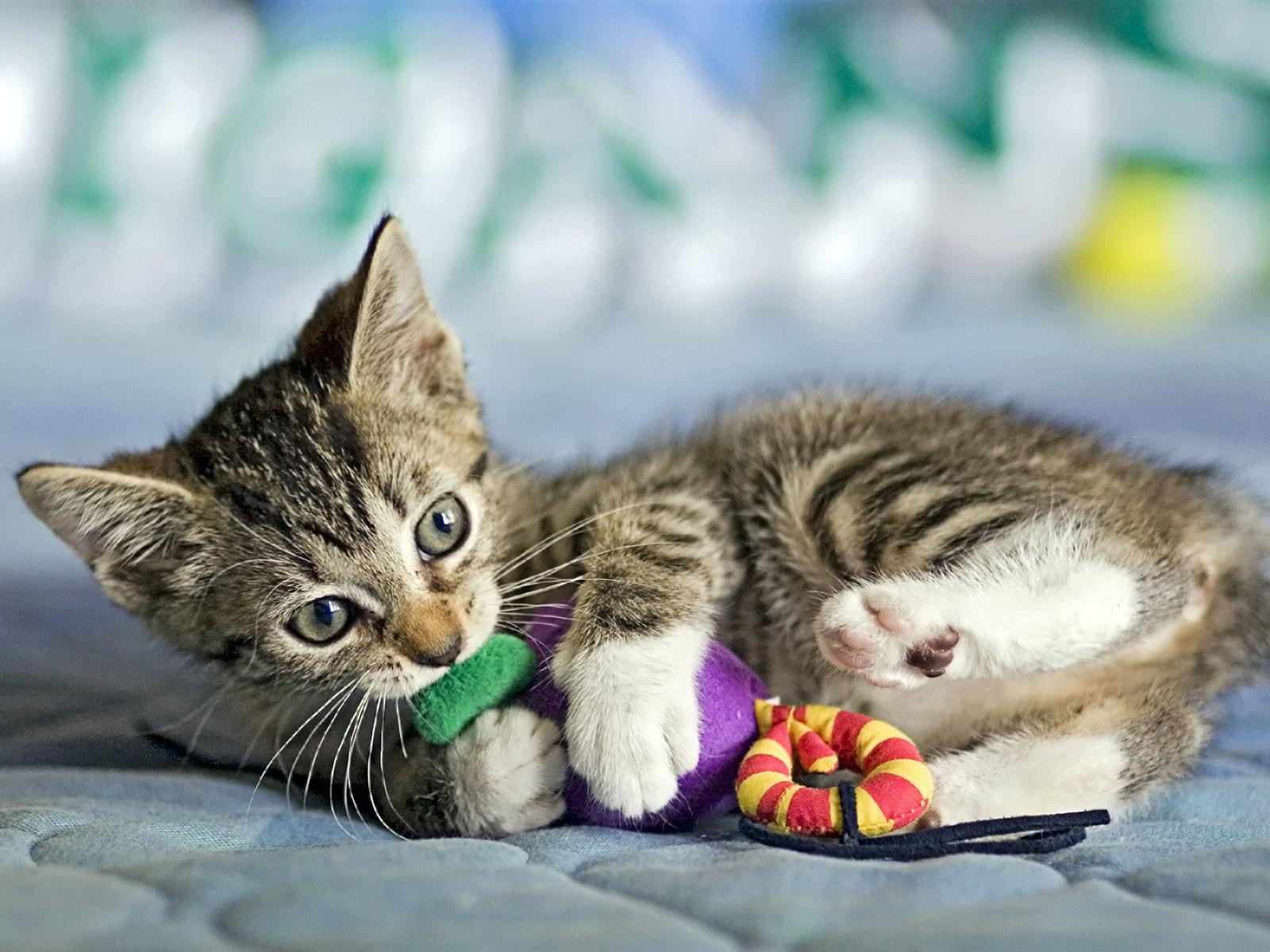 Cómo hacer que un gato acepte a otro