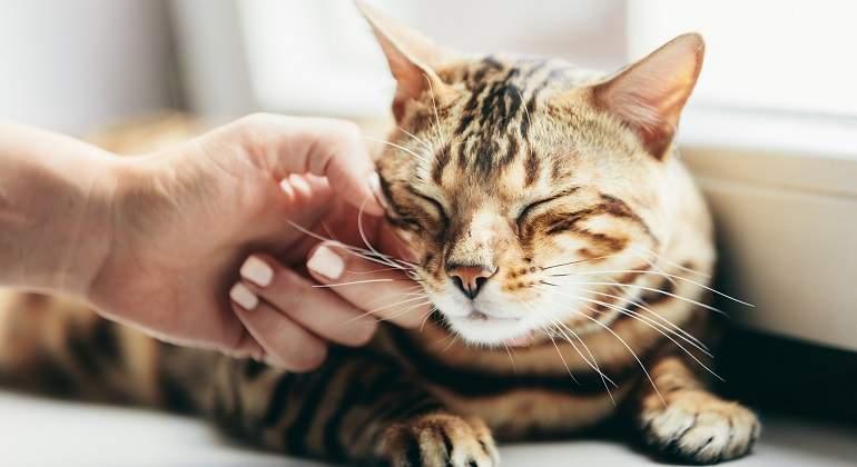 Los gatos domésticos y la importancia de su entorno.