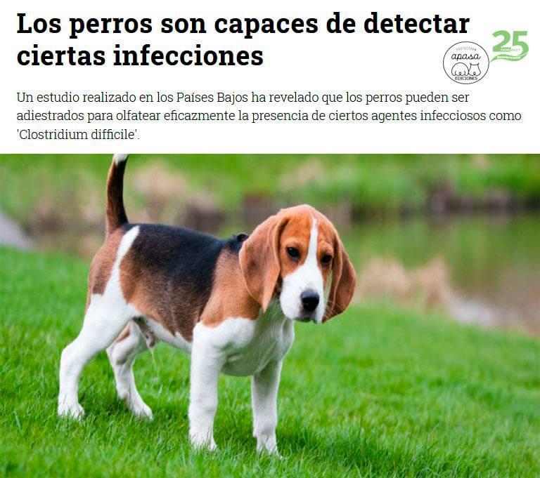 Los perros son capaces de detectar ciertas infecciones