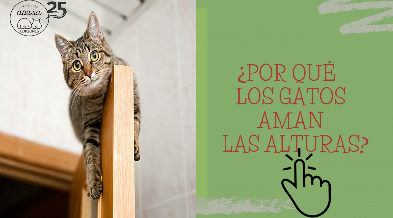Por qué los gatos prefieren las alturas