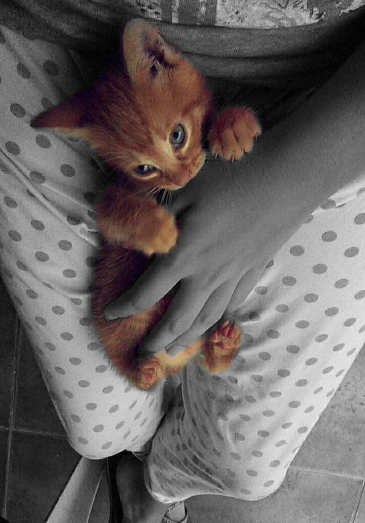Me llevaría a mi gato, porque siempre está cuando más lo necesito y porque es el recuerdo vivo que me queda de mi primer gato.