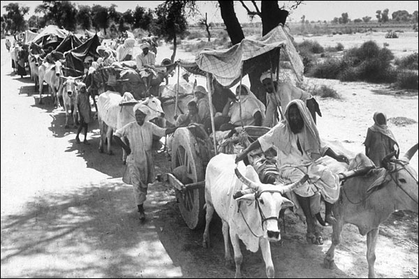 Sijes rurales en una larga caravana de carros de bueyes con destino a la India (1947). Margaret Bourke-White/Getty Images