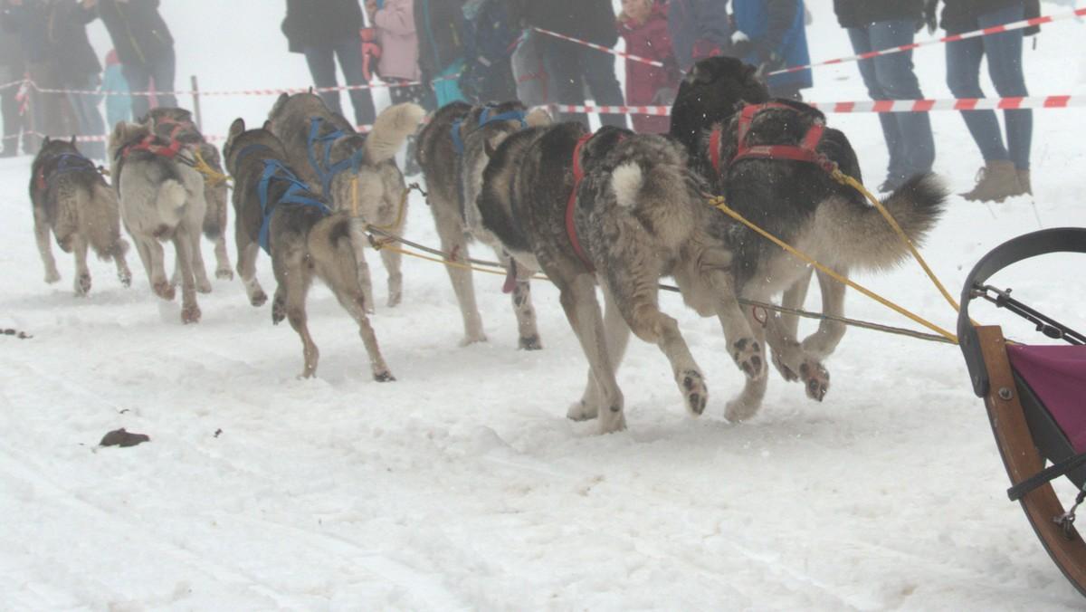 Schlittenhunde 5