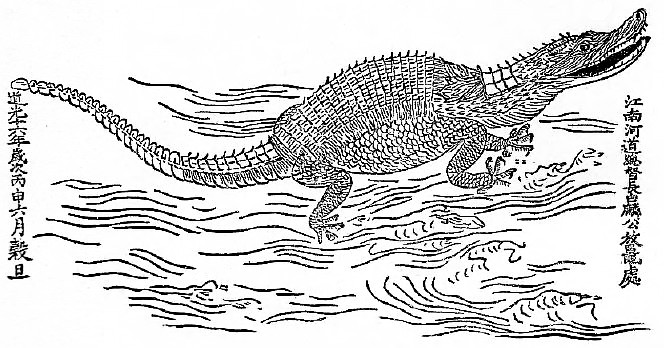 Figure d'un alligator. Henri Imbert : Les alligators et les crocodiles de la Chine. —  Imprimerie d'Extrême-Orient, Hanoi-Haiphong, 1921, 16 pages.