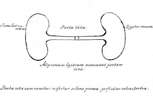 Renum imago. Illustration extraite de l'ouvrage : Specimen medicinae sinicae, édité par Andreas Cleyer