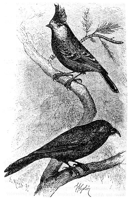 Oiseaux. Armand David (1826-1900) : une autobiographie, extraite de : De quelques services rendus aux sciences naturelles par les missionnaires de l'Extrême-Orient,  notice publiée dans Les Missions catholiques, du 4 mai au 15 juin 1888