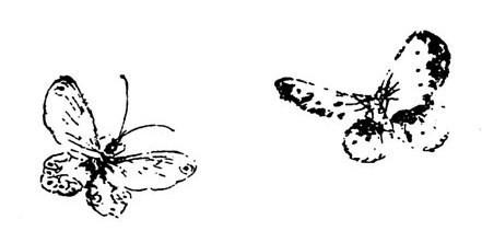 Papillons. - Marcel Granet (1884-1940) : Chansons d'amour de la vieille Chine. — Revue des Arts Asiatiques, vol. 2, n° 3, septembre 1925, pages 24-40.