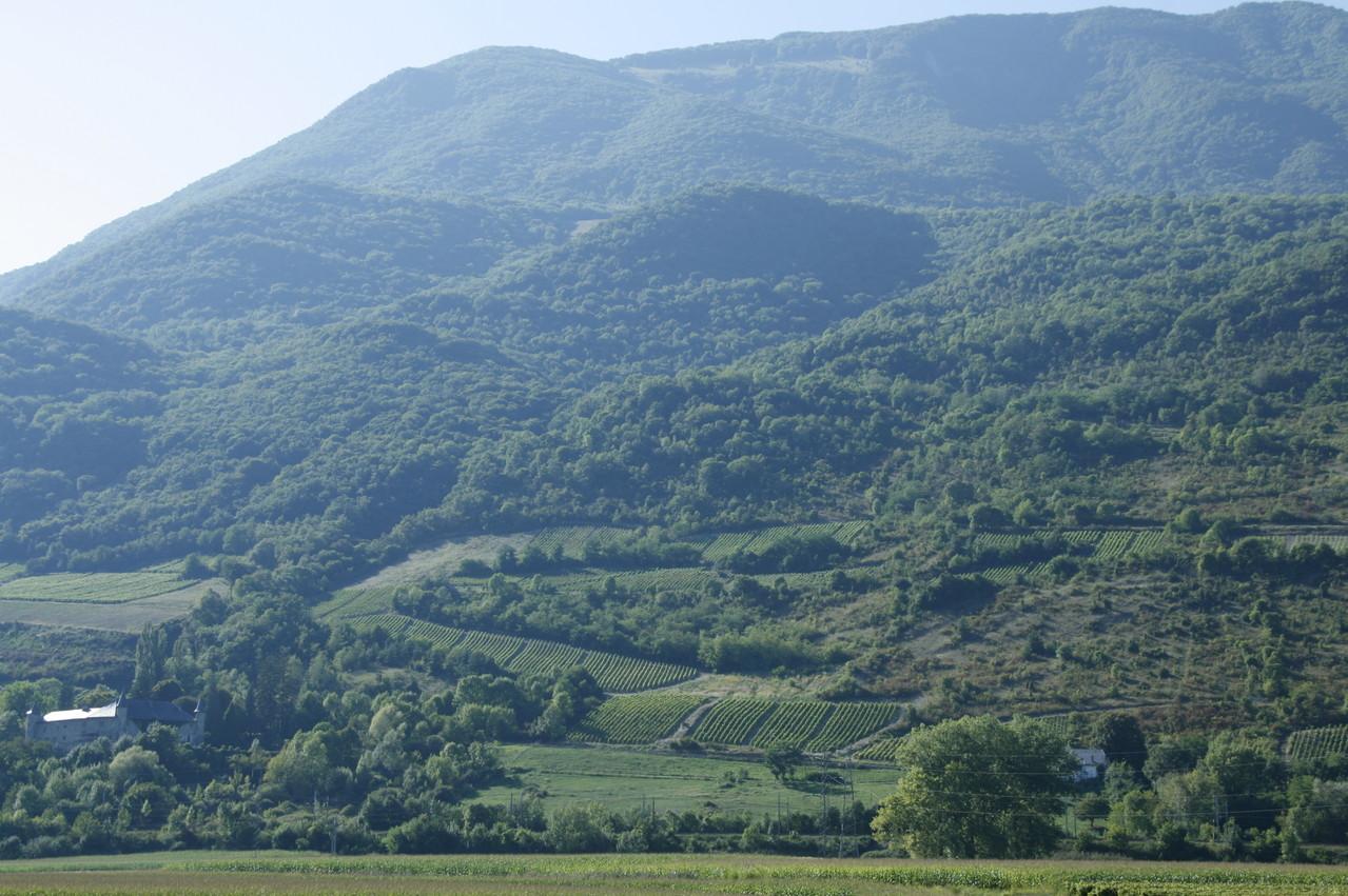 Les vignes vues depuis la vallée (Combe de Savoie)