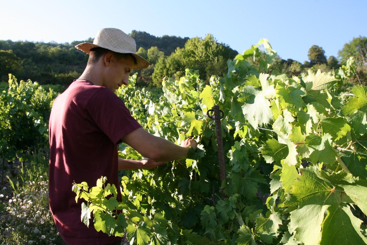 Fier d'être paysan vigneron: retrouver les gestes du passé