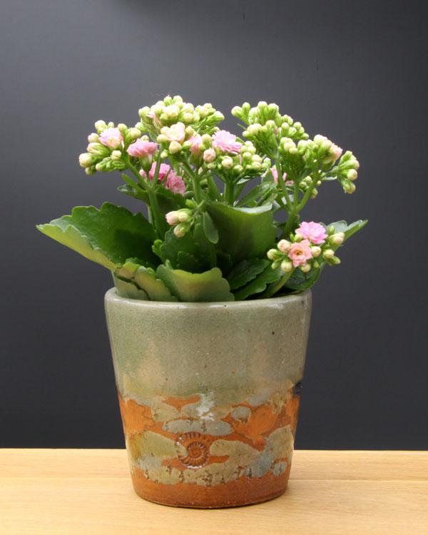 Keramik Übertopf, Dekor Neuseeland, ø oben ca. 13,5 cm, h ca. 12 cm