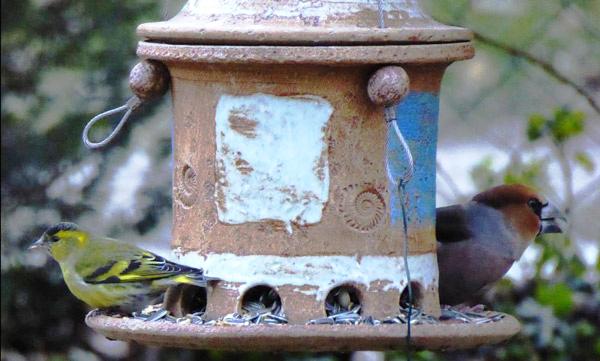 Futterhaus mit Grünfink